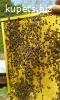 Пчёлы Карпатка. Пчелопакеты.Пчелиные плодные матки