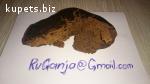 RuGanja@Gmail.com | купить БОШКИ в СПБ, продам ГАШИШ Москва