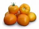 Семена желтого томата KS 17 F1 фирмы Китано